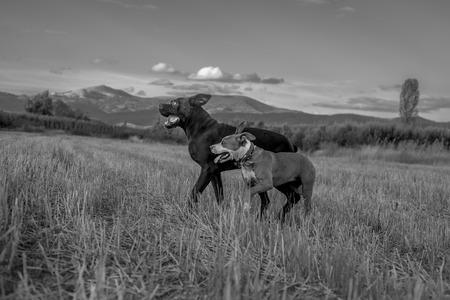 cane collar: freedom
