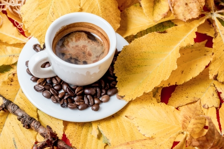 automn cofee cup with leaf and beans Stock Photo