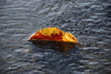 Autumn leaves on a fresh prepared wet concrete photo