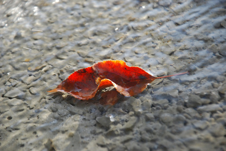 Autumn leaves on a fresh prepared concrete photo