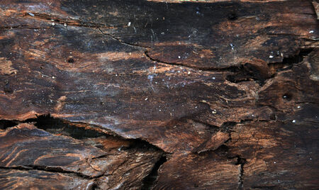 Dry tree wood background photo