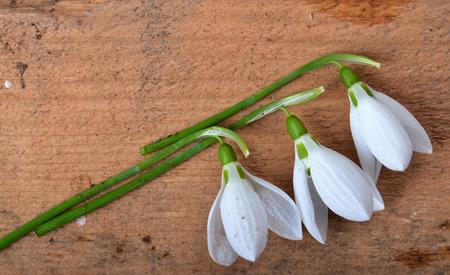 spring photo