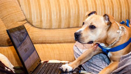 dog using a computer photo