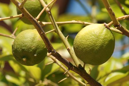 vitamin c on a tree photo