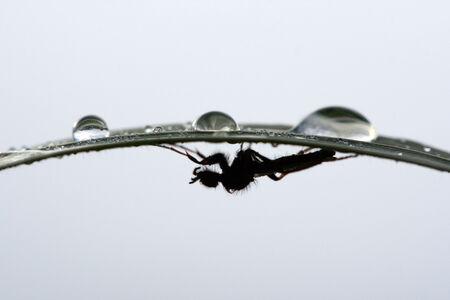under the waterdrop
