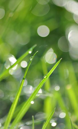 Morning grass Stock Photo
