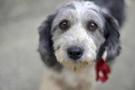 Sad look of a cute stray dog photo