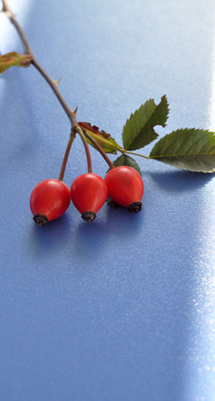 Rose hips with leaves photo