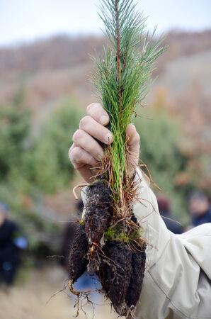 reforestation: Reforestation concept