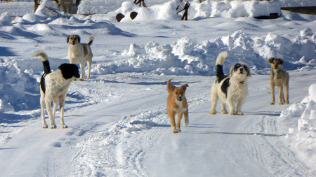 stray dogs on a snow Imagens