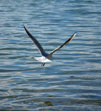 Bild von einem M�wen Vogel