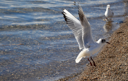 picture of a seagulls bird photo