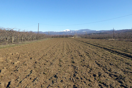 parch: Pictutre of fresh ploughed Farm field ready for planting,