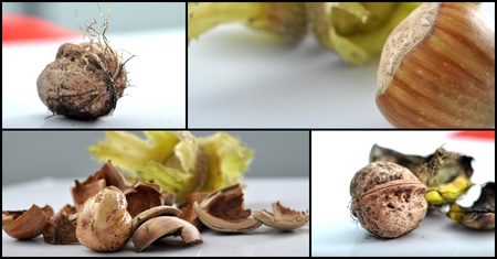whole pecans: Picture of a walnuts and hazelnuts collage