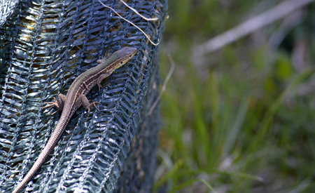 catchlight: Picture of a Lizard on a mesh bag Stock Photo