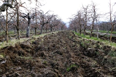 ploughed: Picture of Fresh ploughed field