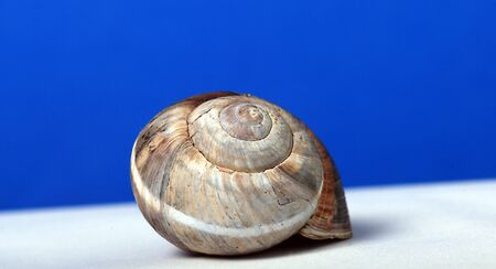 clam gardens: Snail shell, picture of a Stock Photo