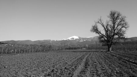 farm field: Pictutre of fresh ploughed Farm field ready for planting,