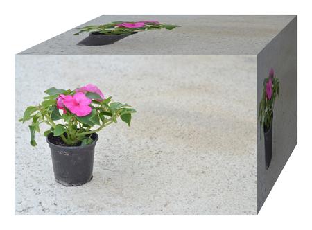 geranium color: Flowers pot  in a shape of cube