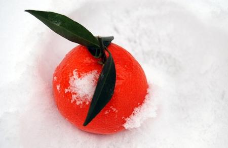 paradox: Tangerine on snow