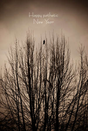somber: Picture of a Ugly somber day, Bird on a tree