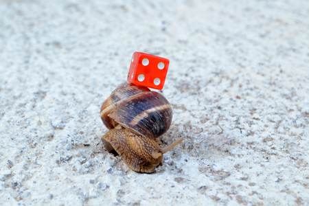 red dice: red dice on a snail shell