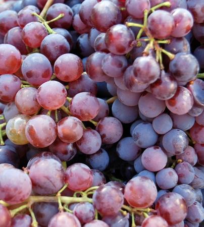 uvas: foto de una uva roja madura