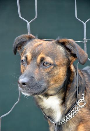doggie: cute brown doggie