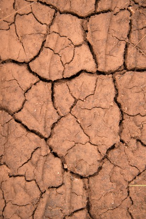 barrenness: Picture of a Dry and cracked earth texture Stock Photo