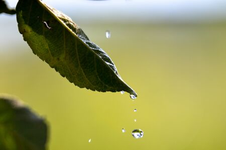 waterdrops: Picture of a waterdrops on a leaves in the morning