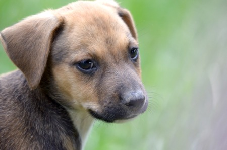 cute puppy: picture of a Cute puppy