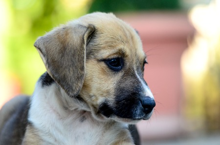cute puppies: Picture of a Cute puppies two month old Stock Photo