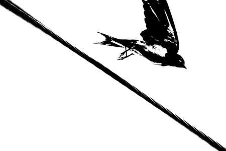 hirundo rustica: Picture of a Barn Swallow (Hirundo rustica) on the morning