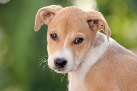 cute puppy: picture of a cute puppy. Animal nad pet theme Stock Photo