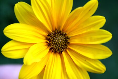 standout: picture of a Yellow flower , macro Stock Photo