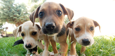 Pictrure of a Cute puppies. Pet and animal theme Banco de Imagens