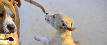 puta: la ternura de la ma�ana, el juego cachorro con perra, tema animal