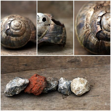 clam gardens: Picture of a Empty snail shells Stock Photo