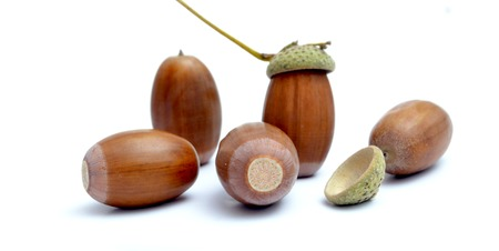fagaceae: Picture of an Acorns on the white background. Autumn theme Stock Photo