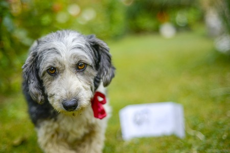 adopted: Picture of a Cute look of an adopted stray dog