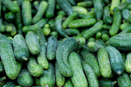 cuke: picture of a fresh cucmbers for sale