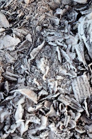 papel quemado: Imagen de un papel quemado escarchado Foto de archivo