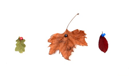 pictured: picture of a Autumn leaves  pictured in a studio Stock Photo