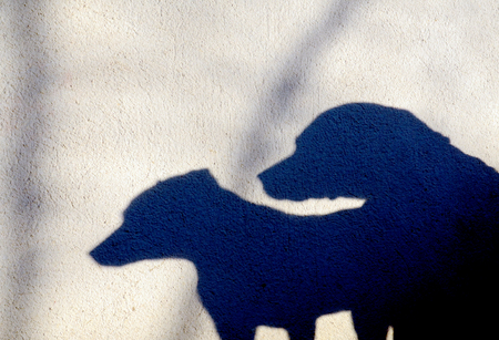 silhouette silhouettes: Picture of a Silhouette of two dogs on a wall Stock Photo