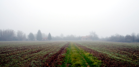 distort: Picture of a Wheat filed under the fog
