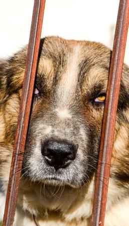 animal themes: Picture of a  Sad dog behind bars. Animal themes Stock Photo