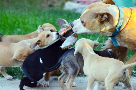 Picturte de un caramelo cachorros desgarro zapatillas viejas con su madre