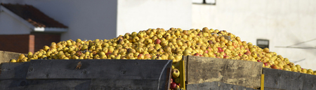 cull: Picture of a Industrial apples in a truck Stock Photo
