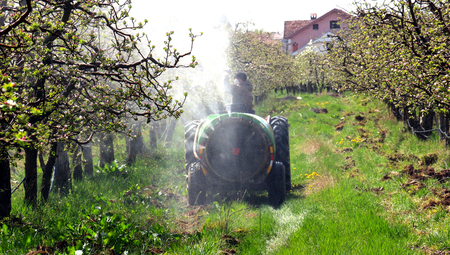 toxicity: Picture of a spraying apple orchard in spring