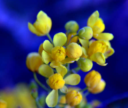 yellow blossom: picture of a yellow blossom of a plant,macro